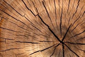 Journée portes ouvertes des entreprises du bois