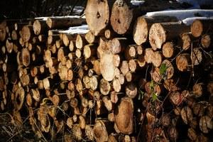 Vente des bois de chauffage certifiés PEFC